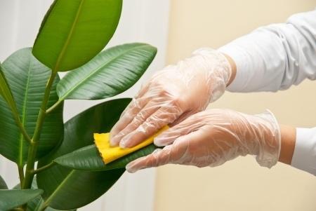 ▷ Cómo cuidar y mantener limpias las plantas artificiales . ✔Fácil